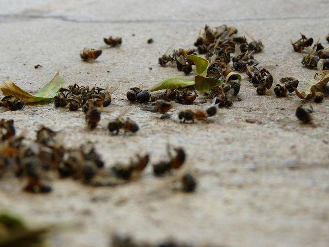Recientemente en el Reino Unido luego de una perdida sin precedentes de abejas, la Unión Europea prohibió varios plaguicidas incluyendo los neonicotinoides.