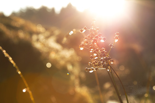 sunshine and bokeh...