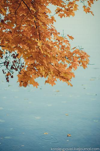 Autumn-219