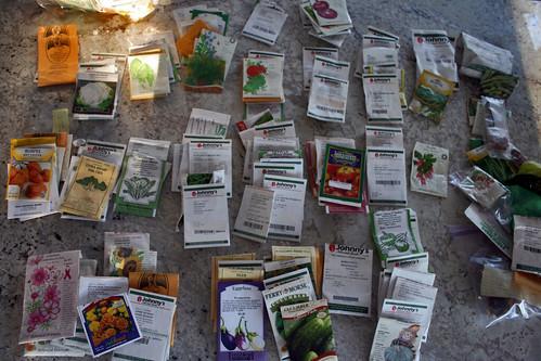 sorting seeds IMG_1299