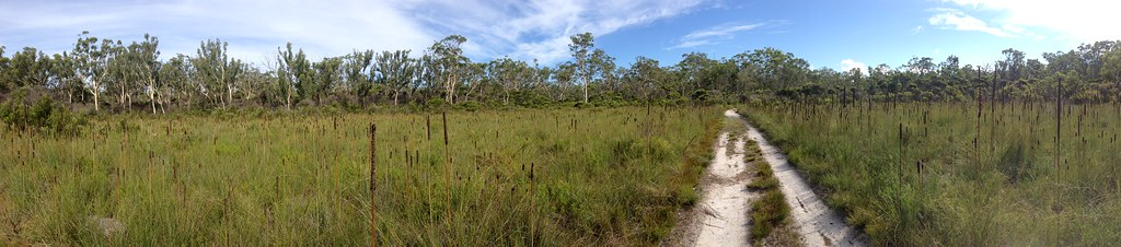 Panorama of heathland, Mooloolah River N.P., Queensland, Australia