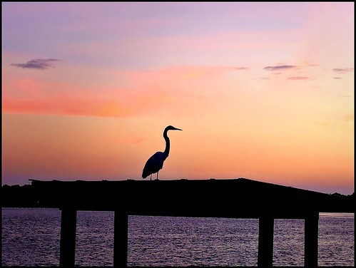 sea sky silhouette sunrise florida outdoor pointandshoot serene egret panamacitybeach newday greatwhiteegret wadingbird standrewsstatepark floridastateparks grandlagoon photoborder nikoncoolpixp600