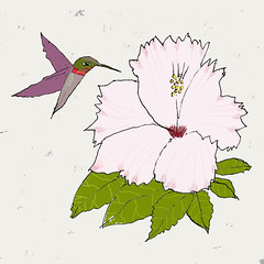 The world 39 s most recently posted photos of drawing and hummingbird flickr hive mind - Oiseau mouche dessin ...