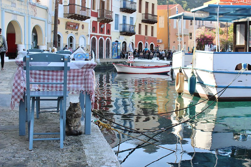 cat, Kastellorizo, Greece