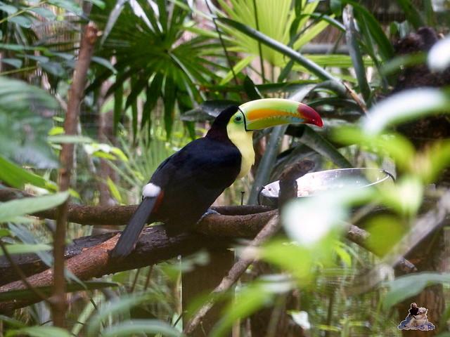 Belize Zoo 19.11.2014 61