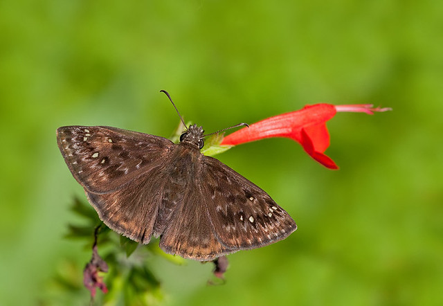 field guide to butterflies and moths