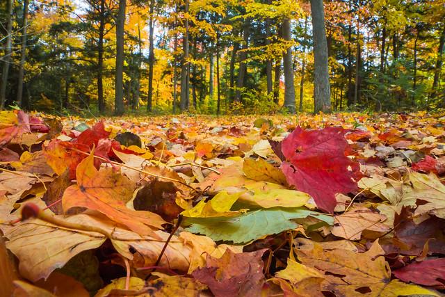 Woodland Litter