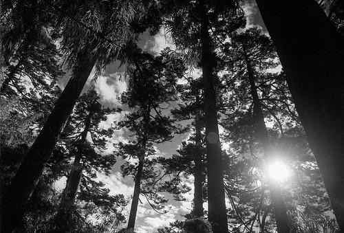 blackandwhite bw film monochrome analog forest hiking olympus olympusom2 zuiko 黑白 om2 玉山 bwfilter 森林 登山 底片 kentmere crystalscan7200 kentmere400 7250u primefilm7250u kentmerefilms hzuikoautow24mmf28 022filter