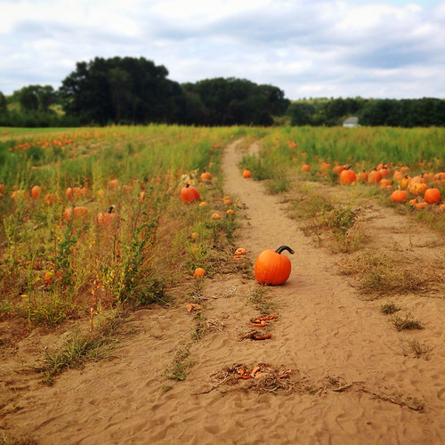 pumpkin path by shana, via I {heart} Rhody