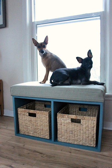 6 Diy Window Perches Your Pet Will Love Fetch Blog