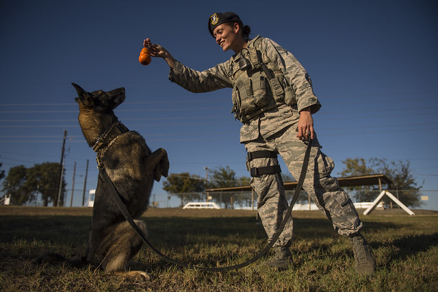 Military working dogs logo - photo#47