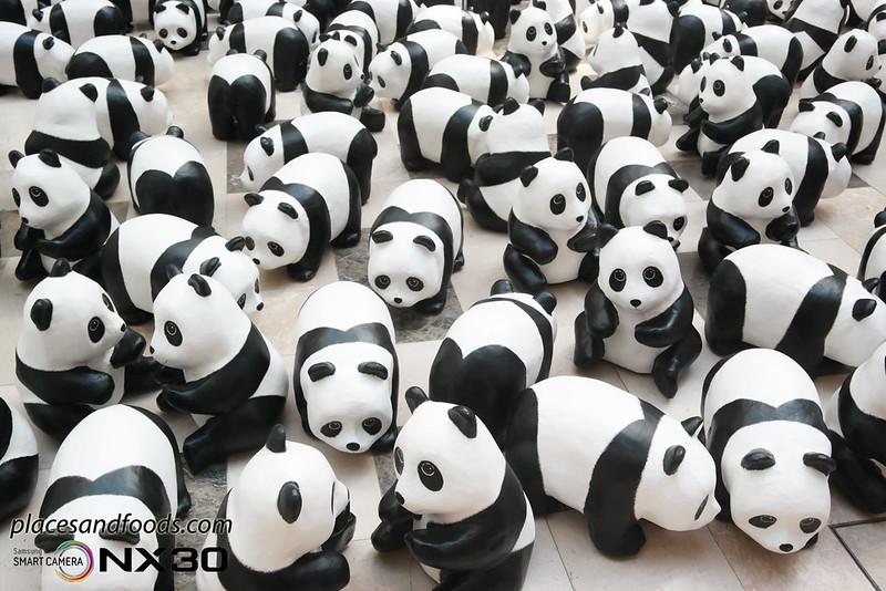 publika 1600 pandas close up