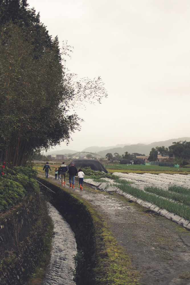 Yilan Spring Onion Country-6