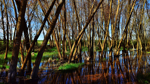 Wetland, Campos branch, The Canal of Castile, Valladolid, Spain