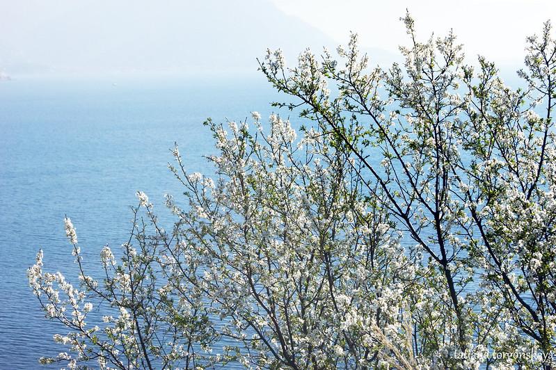 Плодовое дерево на фоне моря