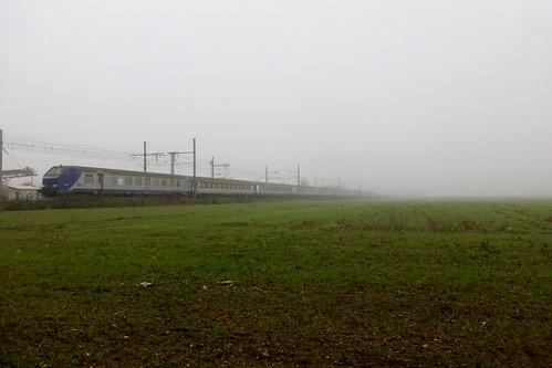 Corail réversible dans le brouillard