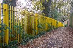 Autumnal fence off The Grove ~ South Farnborough