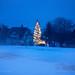 Last christmas tree by Susanne Orlich