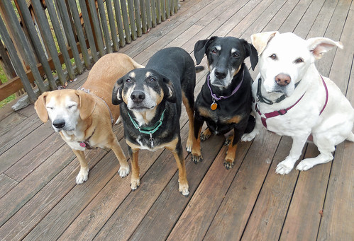 4dogs_111614