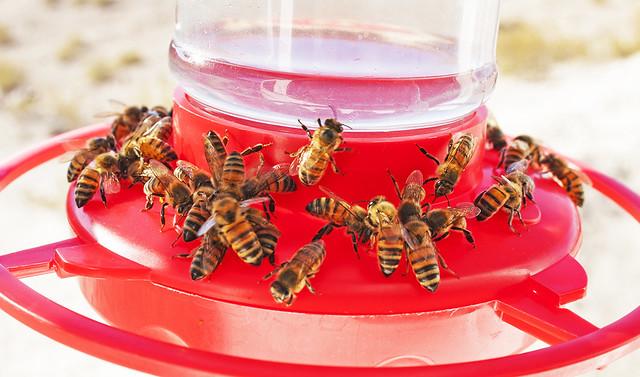 Bee's 20_1453