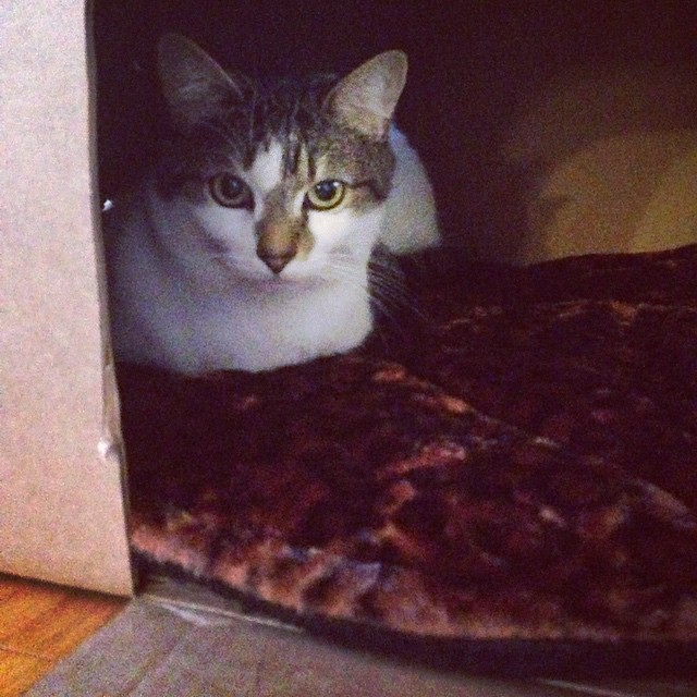 New wing added to cardboard castle. This room has a heated fur floor. Penny has claimed it and will not leave for anything.