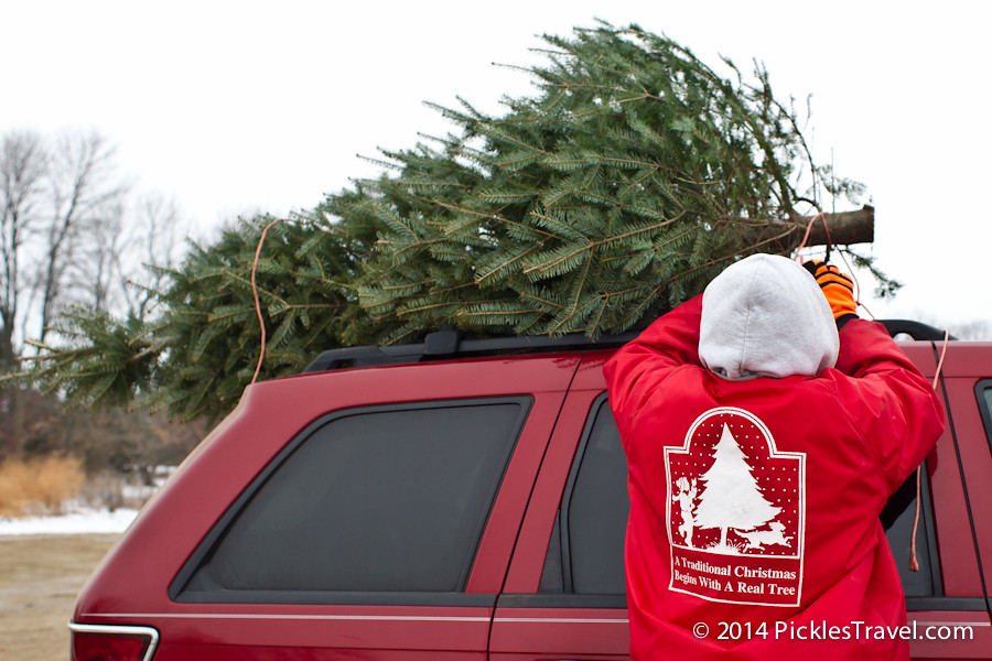 Tie-Christmas Tree Shopping