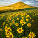 Steptoe Butte Sunrise by Jim Patterson Photography