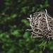 a nest