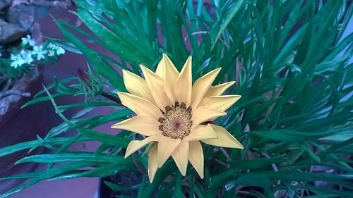 <b><i>«Flor amarilla»</i></b>