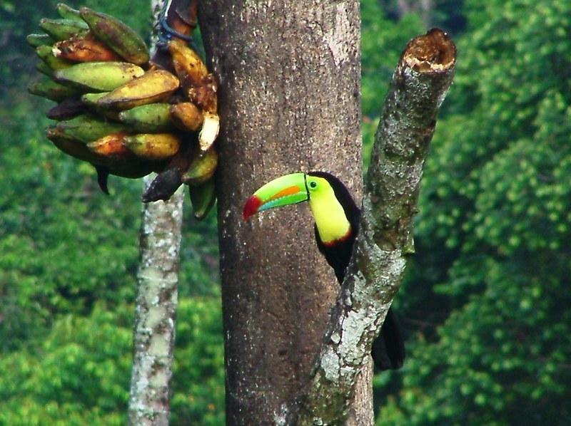 Costa Rica 2006 - 471a