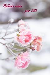 Macros fleurs