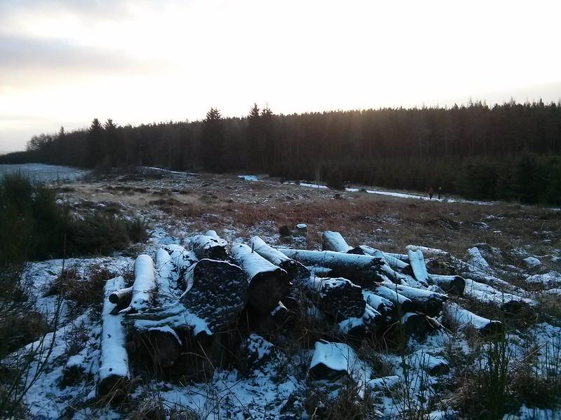 Cut logs near Tillyfourie Hill