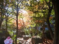 Slurpuff in Oshiage, Tokyo 9 (Oyokogawa water park)