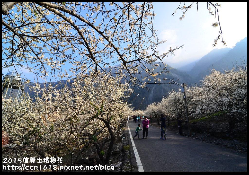 2015信義土場梅花DSC_9322