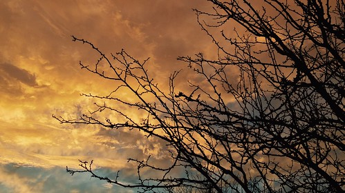 winter sunset tree clouds desert