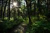 Tantalizing Trail