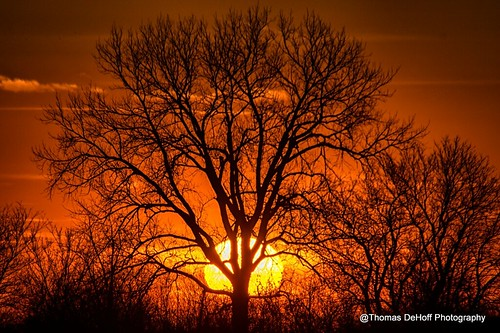 sunset tree sony a580