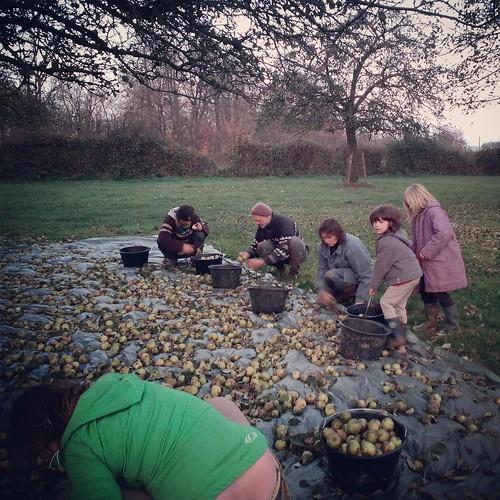 Ramasseurs de pommes