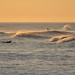 Embracing the wave, sunrise surf in Southern California by christiansaouma