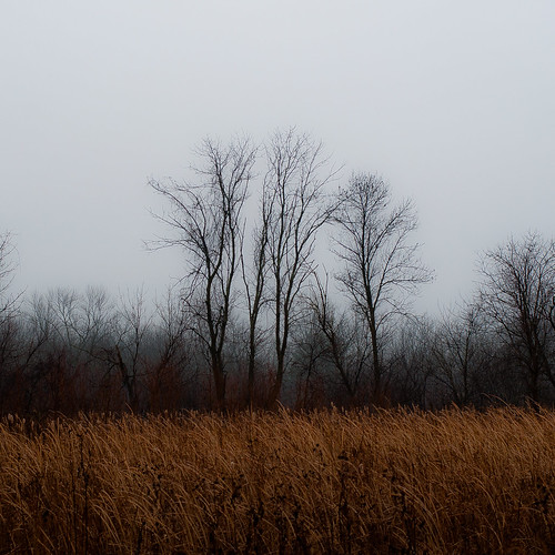 autumn trees mist grass misty fog forest square landscape woods nikon foggy wetlands prairie marshland d5000 noahbw