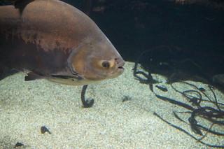 068 Osaka aquarium