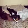 #PeteteVivas duerme con la nariz en el piso jajajaja