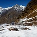 Langtang Trek - day 6 by Rick McCharles