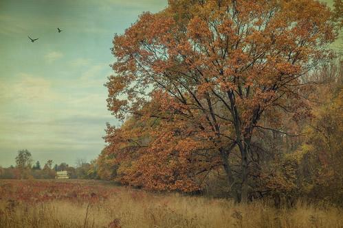 autumn house fall texture nature canon landscape scenic marshlands