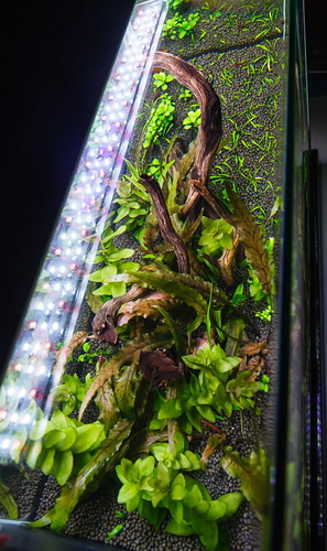 Planted Nano Aquarium