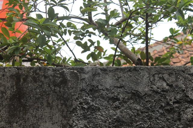 Bunglon Cemberut