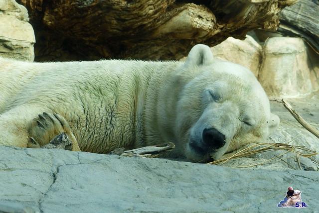 San Diego Zoo 10.11.2014 246