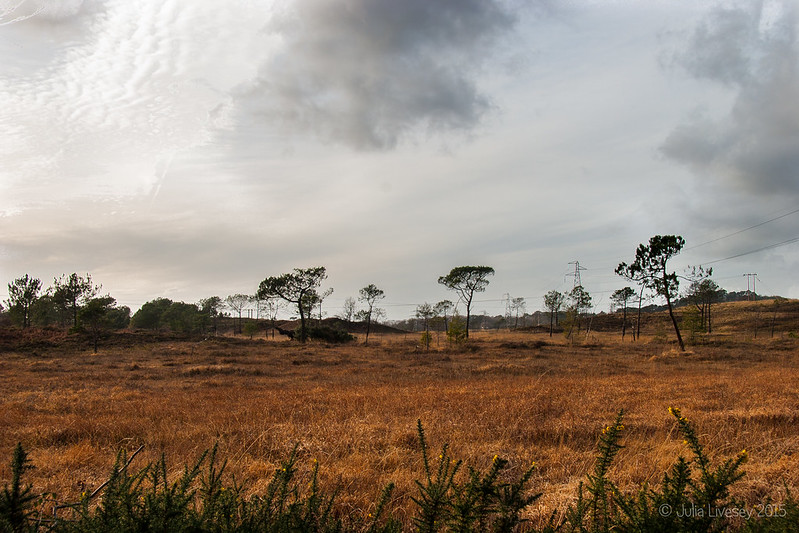 View across Upton Heath
