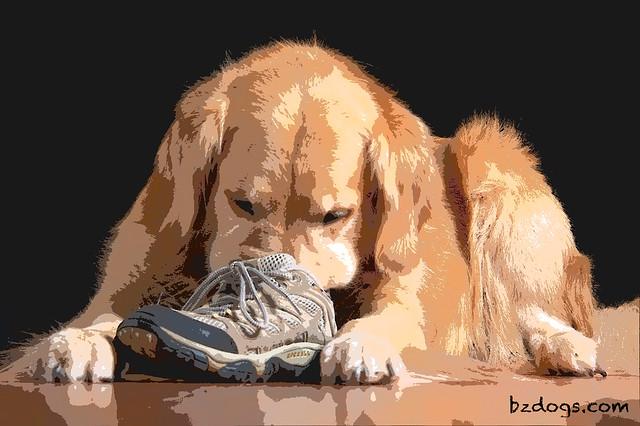 Sniff Test