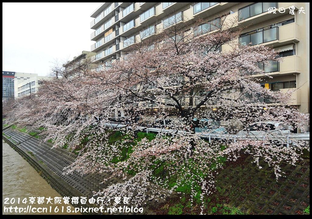 2014京都大阪賞櫻自由行.奈良DSC_0794